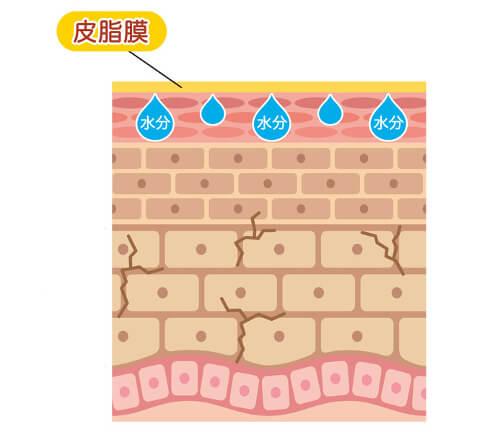 夏の乾燥肌の特徴