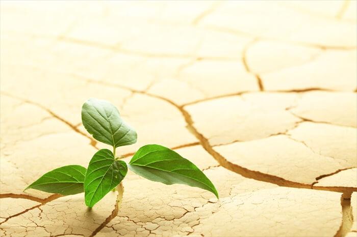 植物由来成分の力